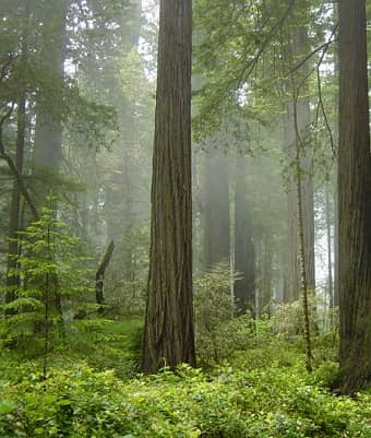 TEMPERATE RAINFOREST CLIMATE